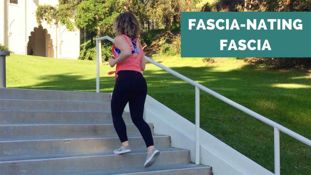 fascinating fascia ae wellness what fascia is and how it works