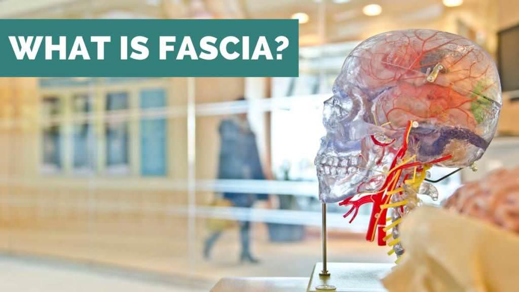 what is fascia ae wellness