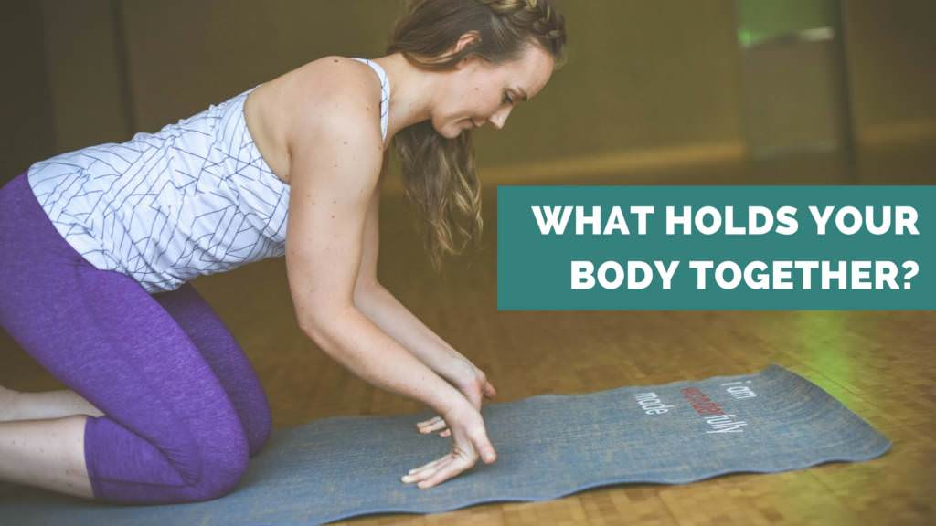 types of muscle and fascia what holds your body together - ae wellness