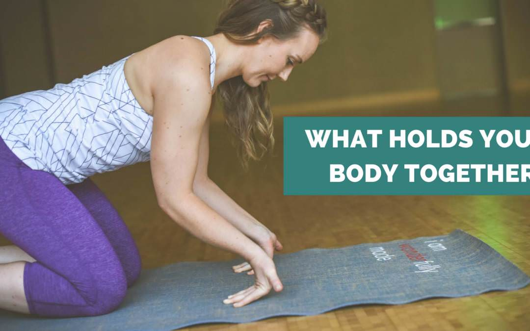 The Types of Muscle and Fascia that Hold your Body Together
